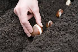 Image result for planting