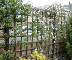 5 Of The Best Climbing Plants  Landscape Gardening SuppliesClimbing Plants For Fence