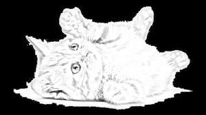 Disegni Di Cani E Gatti Da Colorare E Stampare Migliori Pagine Da