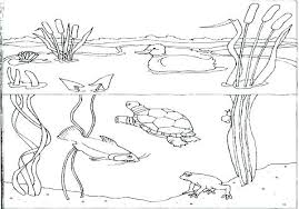 Underwater Scene Coloring Pages Dr Schulz