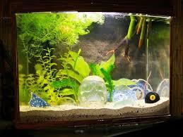 Funny Fish Tank Decorations Stunning Aquarium Decoration Ideas