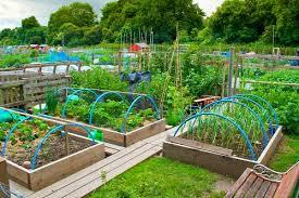 raised beds pros cons garden