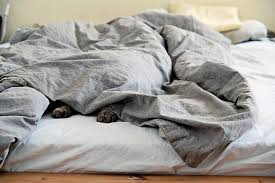 fear not we have some invaluable tips to help you and kitty get enjoy a peaceful zzzzzzzzzz together