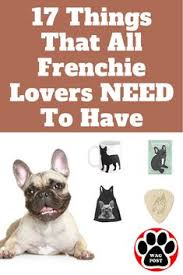 17 things that all french bulldog need to have