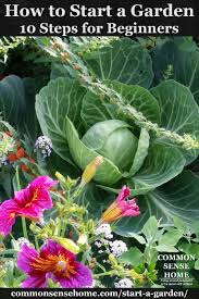 flower gardening for beginners. cabbage and flowers flower gardening for beginners