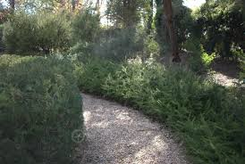 Small Picture Walcotts garden in Canberra Australian Native Gardens