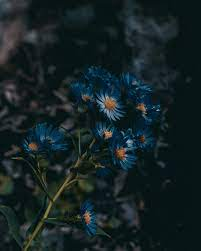 500+ Blue Flower Pictures [HD ...