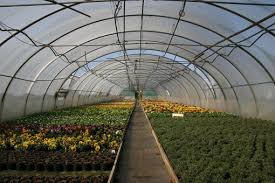 green house effect causes of the greenhouse effect conserve energy future