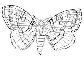 Small Picture Excellent Coloring Pages Bugs 82 4614