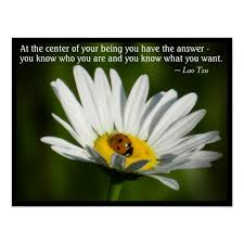 Ladybug Quotes Extraordinary Quotes About Ladybugs Holaklonecco
