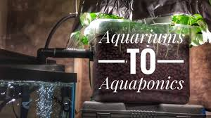 Self Cleaning Fish Tank Garden Aquariums To Aquaponics A Cheap And Easy First System For Fish