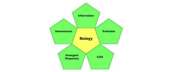 What Is Homeostasis In Biology How Homeostasis Ties To Other Big Ideas In Biology