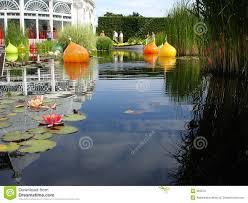 waterlily pond in bronx botanical garden