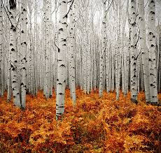 Image result for autumn images