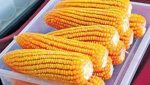 Growing Popcorn Popcorn Maize Cultivation Fad Among Bluru Rural Farmers