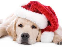 christmas puppies wallpaper. Wonderful Puppies To Download And Set Them On Screen By Simply Clicking Saving With  Right Click The Background Hope You All Like These Cute Christmas Puppies To Puppies Wallpaper O