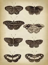 Butterfly Poster Butterfly Print Butterflies Illustration Scientific Butterflies Chart Vintage Butterfly Black And White Aged Insect