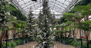 The cardinal flower is the first to begin flowering scarlet. View Christmas Trees And 500 000 Twinkling Lights At Longwood Gardens Phillyvoice