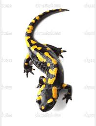 Fire Salamander Tattoo Body Art Gecko Tattoo Tattoos Amphibians