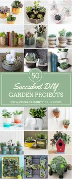 Diy Garden Projects 50 Succulent Diy Garden Projects Prudent Penny Pincher