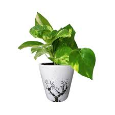 office planter. White Ceramic Planter - Office With Tree Design