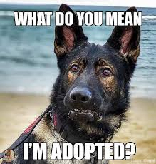 Pin by Rhonda Rogers Kaplan on German Shepherd Meme's | Dog quotes, German  shepherd memes, Dog adoption