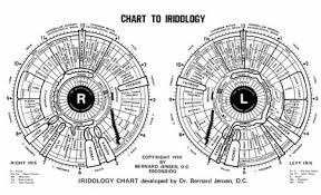 Dr Bernard Jensen Iridology Chart Iridology