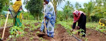 Image result for zanzibar farming