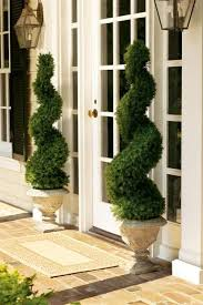 great topiaries by entrance and lanterns