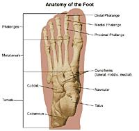 Foot Illness Chart Foot Pain And Problems Johns Hopkins Medicine