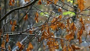 Картинки по запросу погода осінь