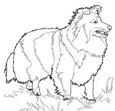 Jack Russell Coloring Page At Getdrawingscom Free For Personal