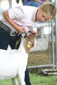 Animals at the Fair | LebanonEnterprise.com
