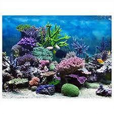 Aquarium Background Pictures Amazon Com Aquarium Background Poster Fish Tank Backdrop Pvc