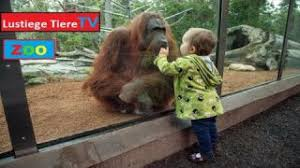Zookinder Lustige Tiere Zum Totlachen 37