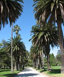St Kilda Botanical Gardens - Wikipedia