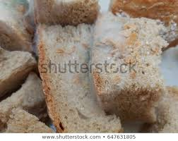Pieces Bread Covered By White Mold Stock Photo Edit Now 647631805