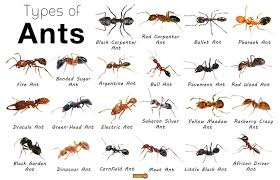 get rid of ants in your home 7 tips