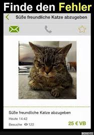 Lustige Sprüche über Dicke Katzen Gute Bilder