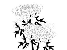 白黒の菊イラスト No 1177451無料イラストならイラストac