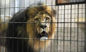 Zoo duisburg rabatt 2017