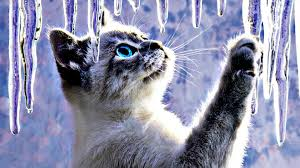 Cute Winter Cats Wallpapers - Wallpaper ...