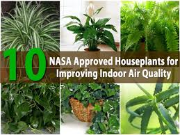 Top 10 NASA Approved Houseplants for Improving Indoor Air Quality - DIY &  Crafts
