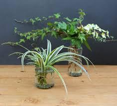 grow indoor plants in glass bottles apieceofrainbow 5