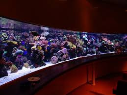 best tanks from around the world reef central community