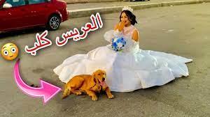 اخيراً فرح هبه مبروك العريس كان صدمه للكل🐕😳 - YouTube