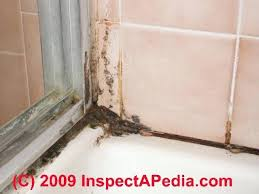 black mold in shower caulk cleaning