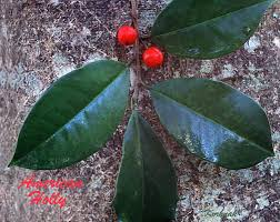 Red And Green Fruit Bearing Trees At Daytime Free Image  PeakpxRed Leaf Fruit Tree