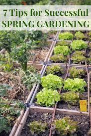spring vegetables growing in raised garden beds