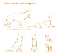 German Shepherd Dimensions Drawings Dimensions Guide